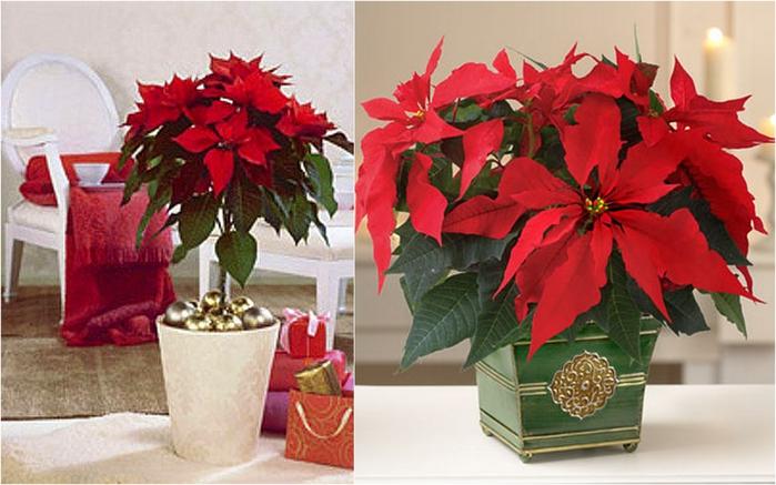 Растение в подарок как знак