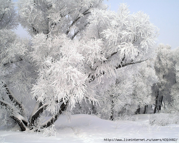 4310082_33winter (600x480, 298Kb)