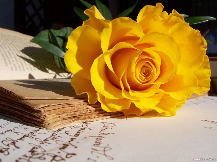 02_roses (700x525, 90Kb)