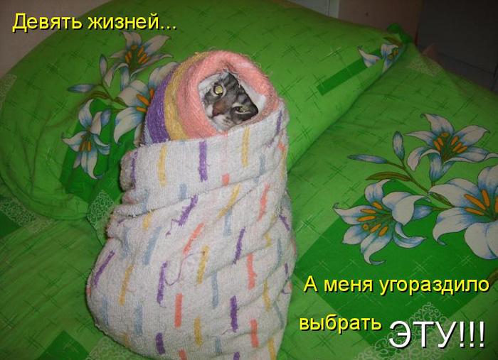 prikolnye-koty-i-sobaki-81 (700x507, 145Kb)