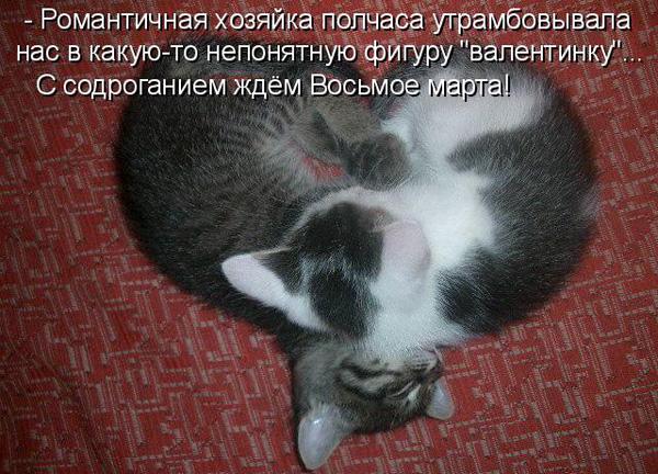 prikolnye-koty-i-sobaki-84 (600x432, 147Kb)