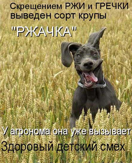 prikolnye-koty-i-sobaki-86 (441x543, 121Kb)