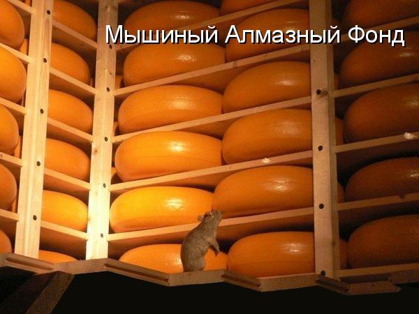 prikolnye-koty-i-sobaki-89 (600x450, 76Kb)