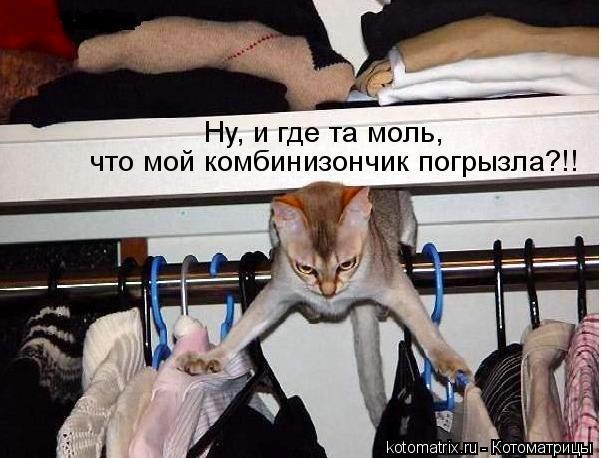 смешные коты фото/1324814841_kot (601x458, 64Kb)