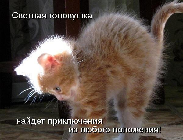 Прикольные животные фото