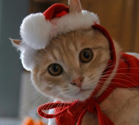 cat_santa (469x422, 74Kb)