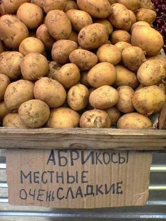 абрикосы местные (338x450, 130Kb)