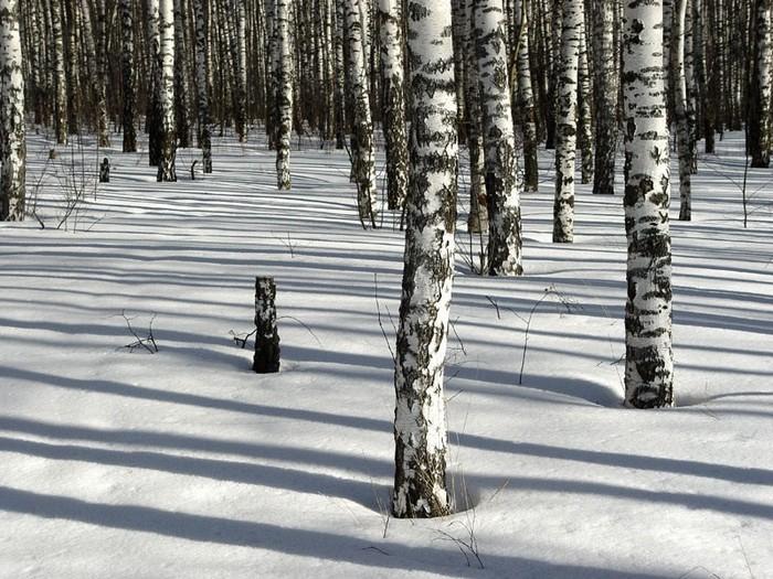 Красивые зимние пейзажи от фотографа Михаила Ткачева