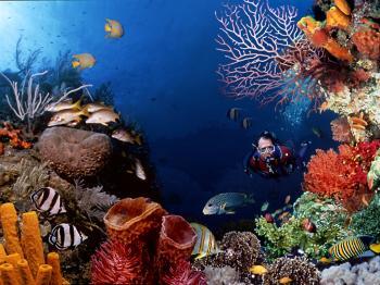 Scuba-Diving (350x262, 26Kb)