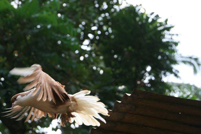 страусы 126 (700x466, 44Kb)