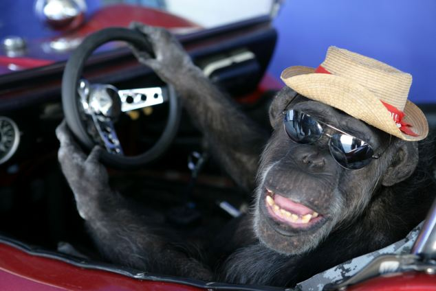 Шимпанзе Чита из Тарзана