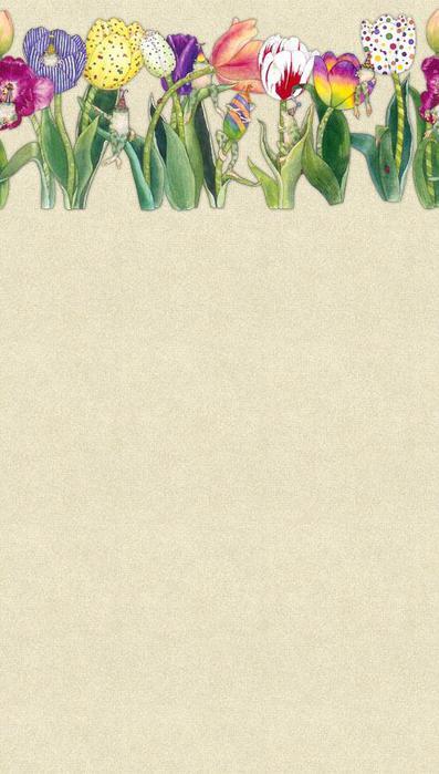 tulip48 (397x700, 41Kb)