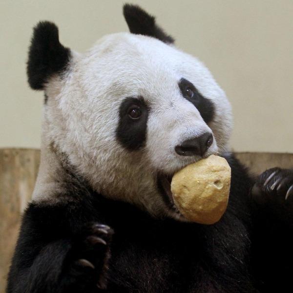 panda sweetie 1 (600x600, 73Kb)