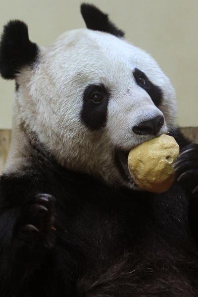 panda sweetie 5 (400x600, 53Kb)