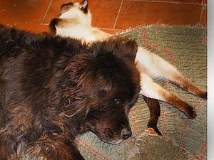 Для тех, кто хочет свалять собачью шерсть | Ярмарка Мастеров - ручная работа, handmade/3576489_20091ed0d8 (300x225, 57Kb)