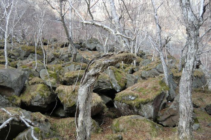 Чанбайшань – биосферный заповедник Китая 44698