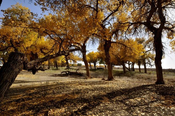 Геологический парк пустыни Алашань 65847