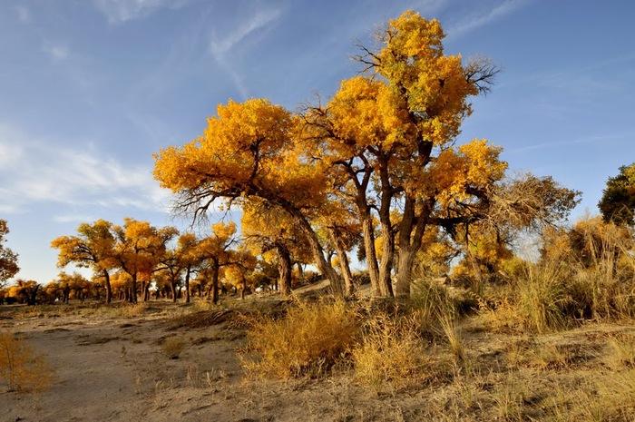 Геологический парк пустыни Алашань 32822