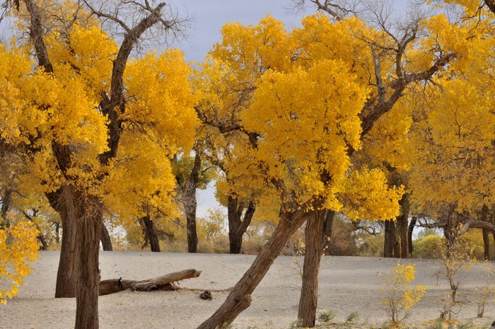 Геологический парк пустыни Алашань 83906