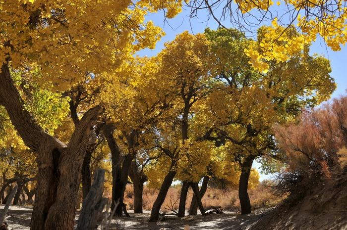 Геологический парк пустыни Алашань 14385