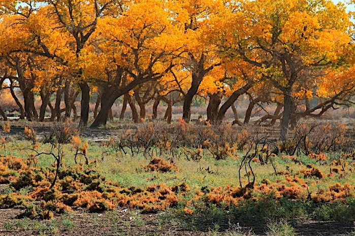 Геологический парк пустыни Алашань 83180