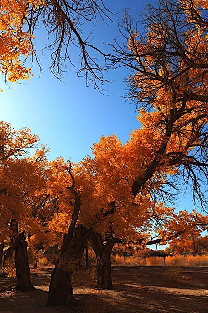 Геологический парк пустыни Алашань 33546