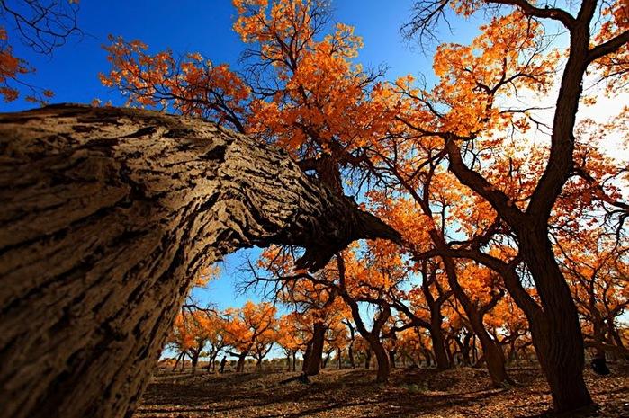 Геологический парк пустыни Алашань 62371