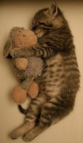 кот с игрушкой 2012