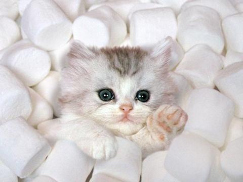 милый кот 2012