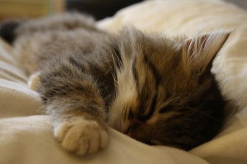 котик спит 2012