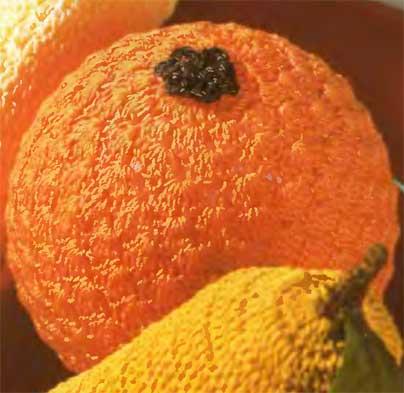 apelsin (404x393, 21Kb)