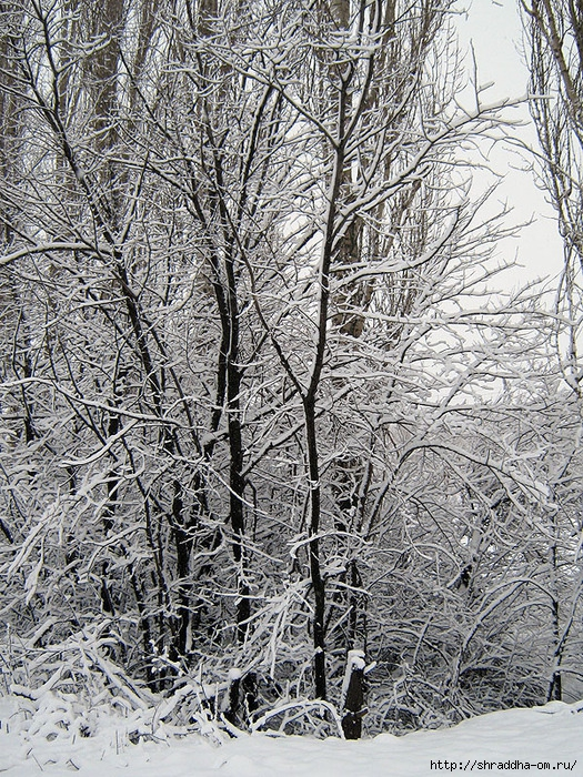 Воронеж, январь 2012, 1 (525x700, 551Kb)