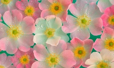 цветы фото/1325688954_cvetuy (400x240, 50Kb)