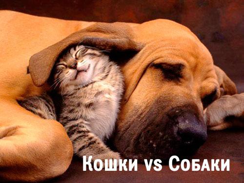 3911698_cat_dog (500x375, 52Kb)