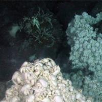 u-beregov-antarktidi-nashli-zateryanniy-mir-1 (200x200, 8Kb)