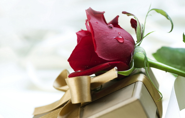 подарок и роза/4348076_240437 (596x380, 81Kb)
