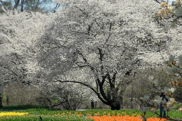 Сады Лонгвуда, Пенсильвания, США. 14188