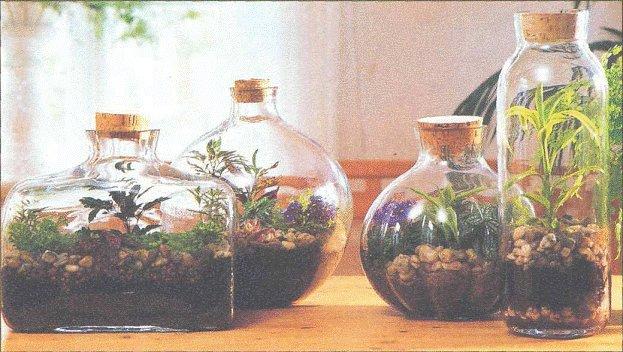 сад-в-бутылке1 (623x352, 70Kb)