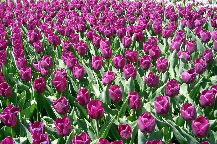 Сады Лонгвуда, Пенсильвания, США. 85634
