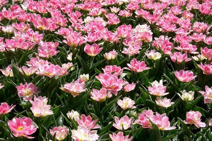 Сады Лонгвуда, Пенсильвания, США. 23117