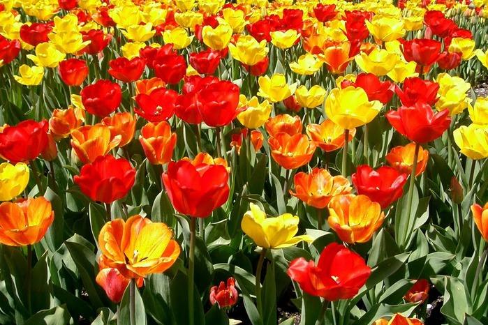 Сады Лонгвуда, Пенсильвания, США. 54648