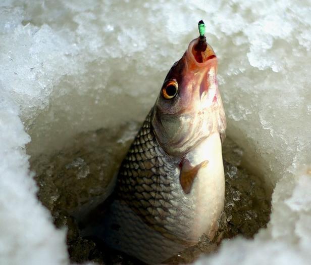 рыба (616x524, 75Kb)