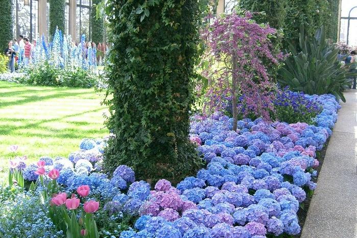 Сады Лонгвуда, Пенсильвания, США. 41307