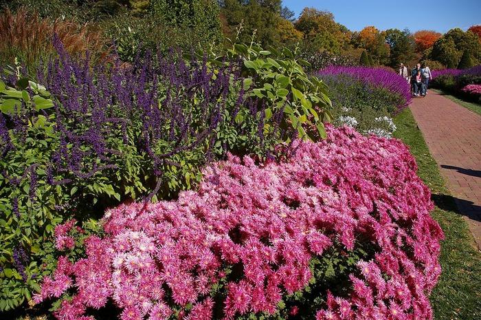 Сады Лонгвуда, Пенсильвания, США. 41503