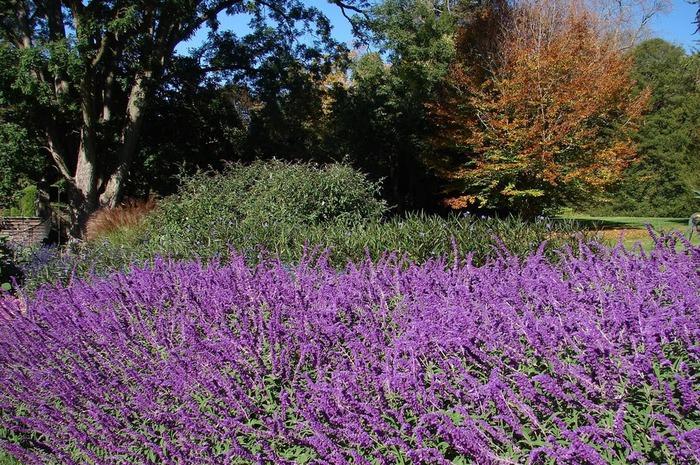 Сады Лонгвуда, Пенсильвания, США. 38578