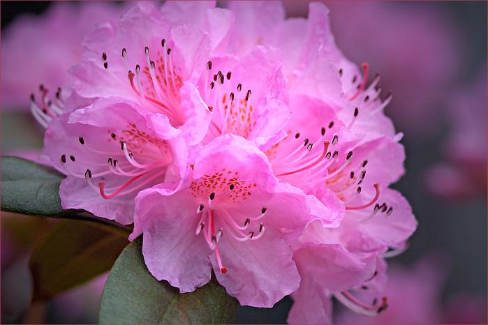 07_flowers (700x466, 126Kb)
