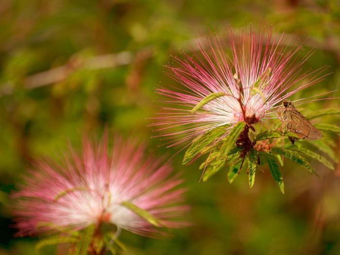 Beautiful-Flowers-054 (700x525, 444Kb)