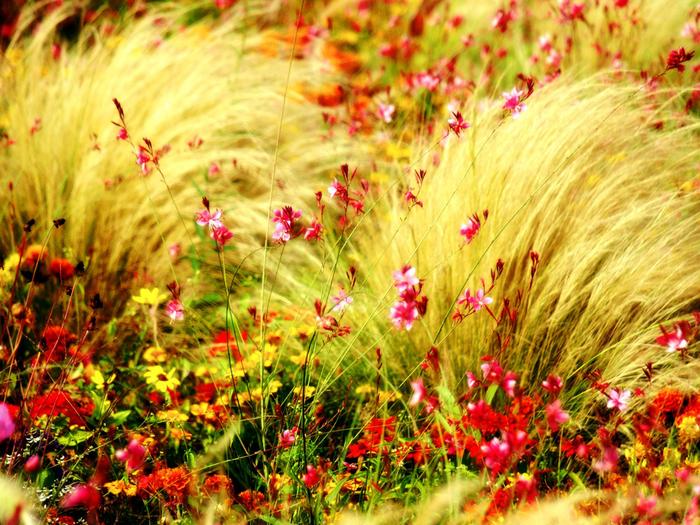 flower_wallpapers (86) (700x525, 611Kb)