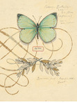 Превью chad-barrett-scripted-papillon (334x450, 41Kb)