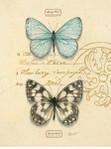 Превью mariposas.III (445x600, 67Kb)